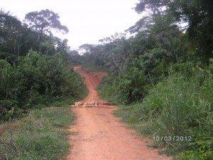 piste-rurale-nkoloboudou-omvang-300x225