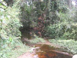 riviere-mimbang-nkoloboudou-omvang-ayos1-300x225